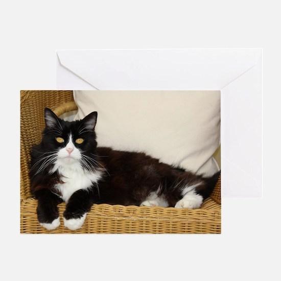 Cute Black white tux cat Greeting Card