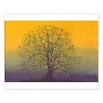 31.summertree.. 13
