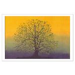 31.summertree.. 35