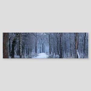 Scottish Bluebell Woods in Winter Bumper Sticker