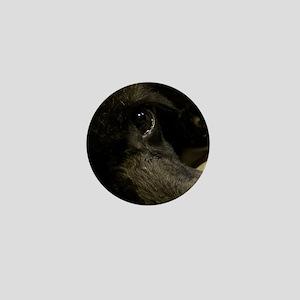 Black poodle Ali's Mini Button