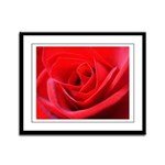 Red Rose Framed Panel Print