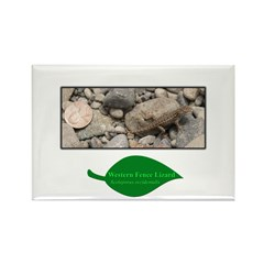Baby Fence Lizard Rectangle Magnet (100 pack)