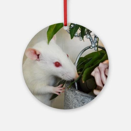 Unique Rat Round Ornament