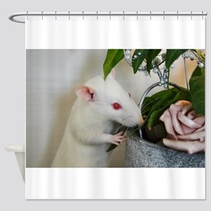 White Pet Rat with Rose Shower Curtain