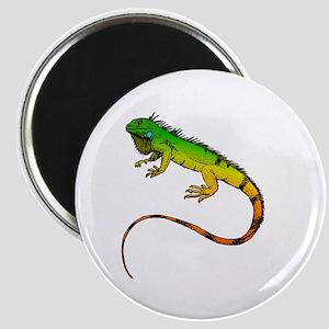 Green Iguana Magnets