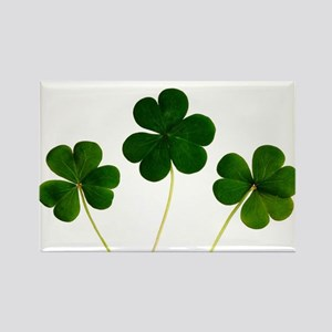 Lucky Shamrocks Magnets