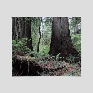 Coast Redwoods Rainforest 03 Throw Blanket