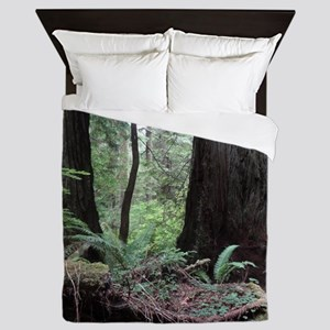 Coast Redwoods Rainforest 03 Queen Duvet
