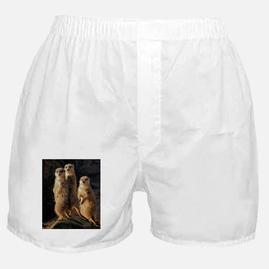 Sun Setting on the Meerkat Trio Boxer Shorts