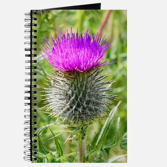Scottish Thistle Journal