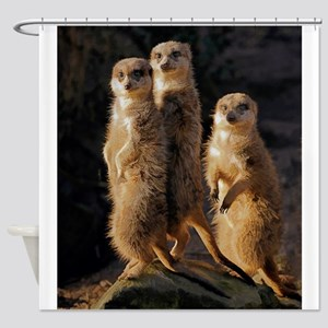 Sun Setting on the Meerkat Trio Shower Curtain