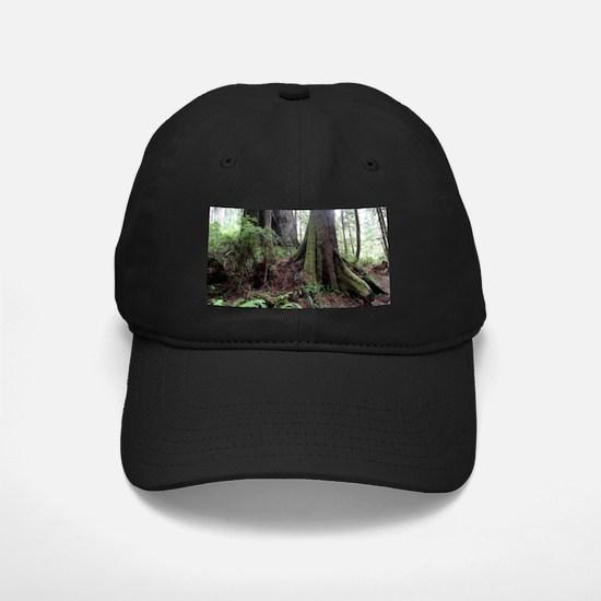 Giant Redwoods Rainforest 04 Baseball Hat