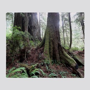 Giant Redwoods Rainforest 04 Throw Blanket
