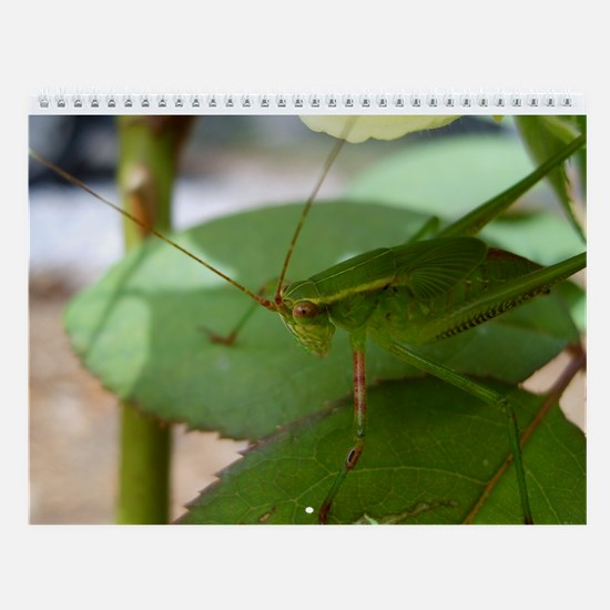 Insects Monthly Calendar