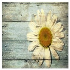 shabby chic country daisy Poster