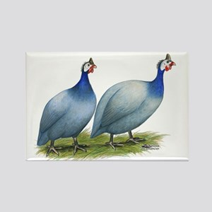 Guineas Slate Pair Magnets
