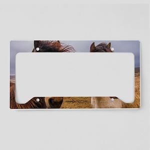 Horses of Iceland License Plate Holder