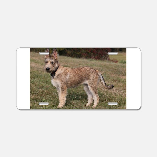 berger picard puppy Aluminum License Plate
