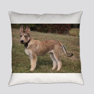 berger picard puppy Everyday Pillow