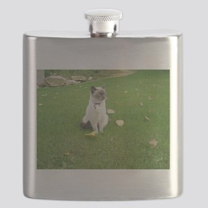 birman sitting Flask