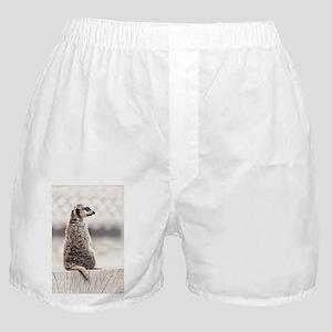 Meerkat Lookout Boxer Shorts