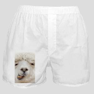 Funny Alpaca Smile Boxer Shorts