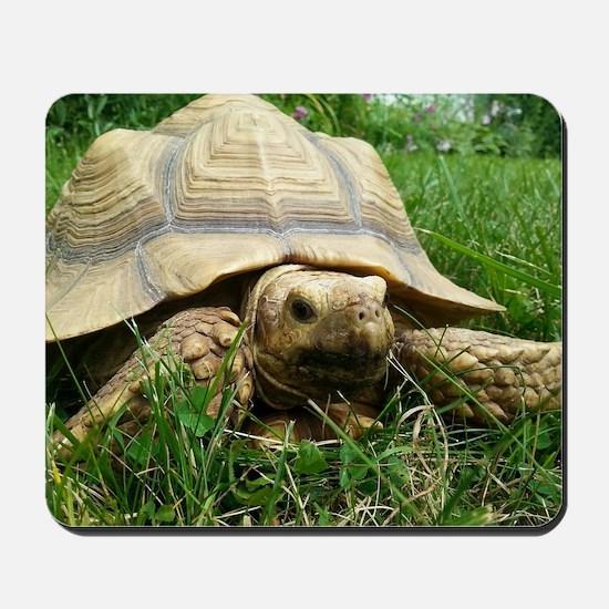 Sulcata Tortoise Mousepad