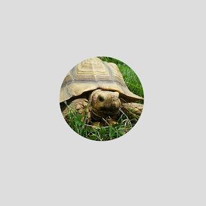 Sulcata Tortoise Mini Button
