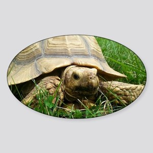Sulcata Tortoise Sticker (Oval)