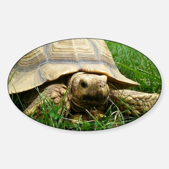 Sulcata Tortoise Sticker (Oval)