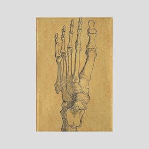 Vintage Foot Bones Magnets