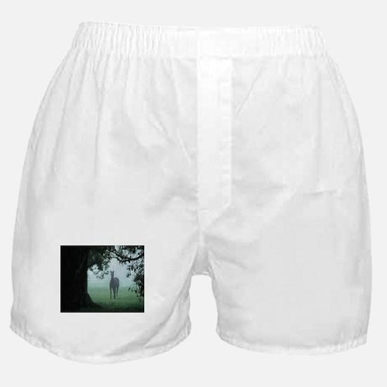 Secret Pasture Boxer Shorts