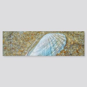 Angelwing Seashell Sticker (Bumper)