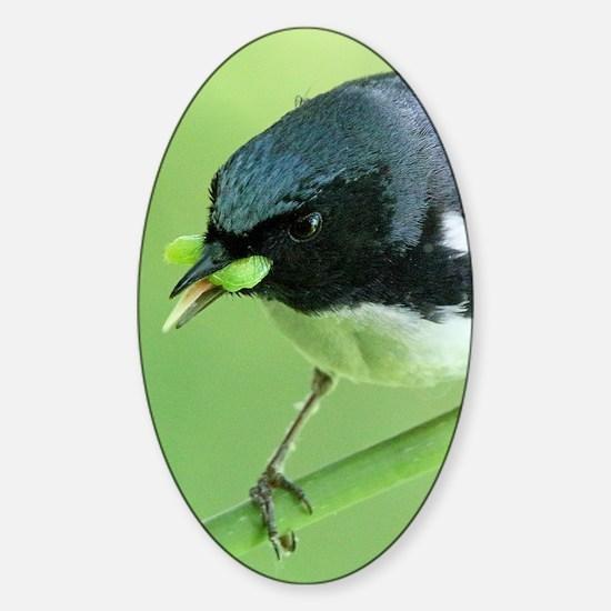 Black-Throated Blue Warbler Sticker (Oval)