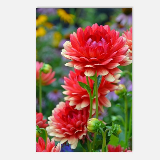 Funny Red flower Postcards (Package of 8)