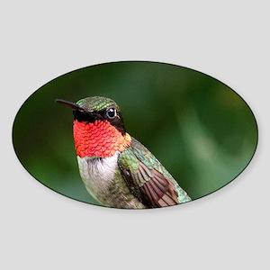 Ruby-Throated Hummingbird Sticker (Oval)