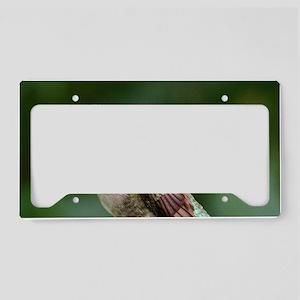 Ruby-Throated Hummingbird License Plate Holder