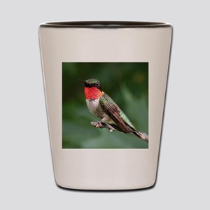 Ruby-Throated Hummingbird Shot Glass
