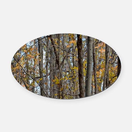 Autmn trees Camo Camouflage Oval Car Magnet