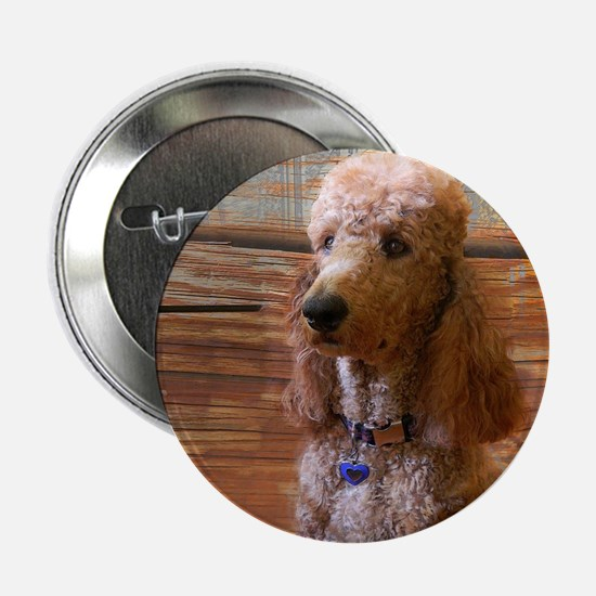 "Cool Standard poodle 2.25"" Button"