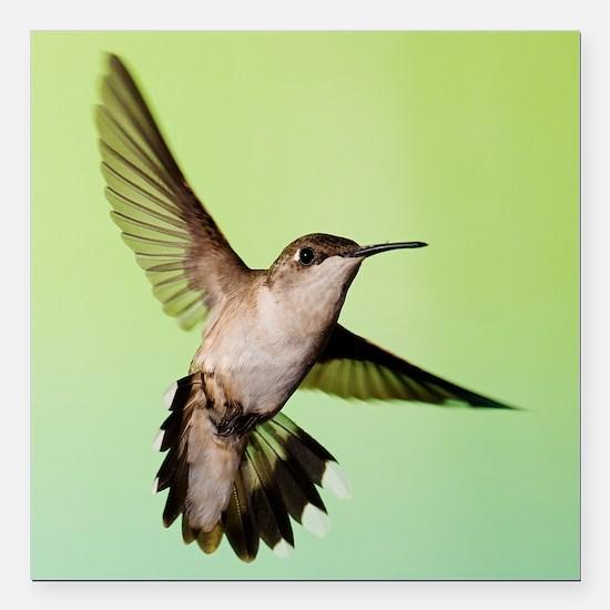 """Female Hummingbird Square Car Magnet 3"""" x 3"""""""