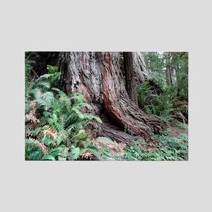 Giant Redwoods Rainforest 06 Magnets