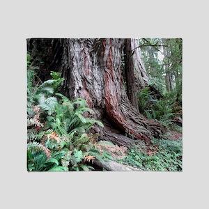 Giant Redwoods Rainforest 06 Throw Blanket