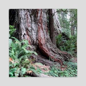 Giant Redwoods Rainforest 06 Queen Duvet