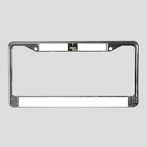 stream License Plate Frame