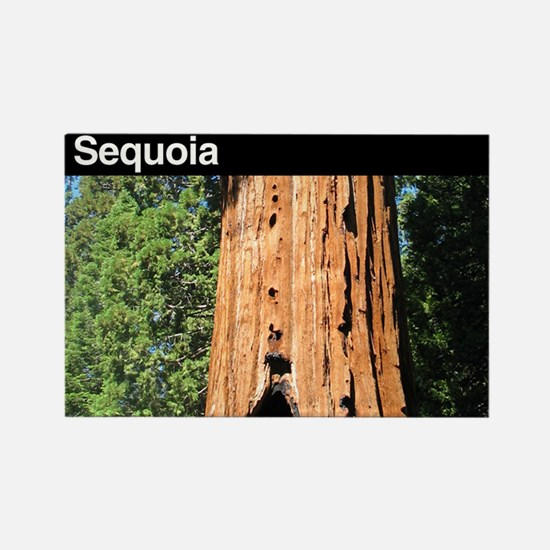 Sequoia National Park Rectangle Magnet