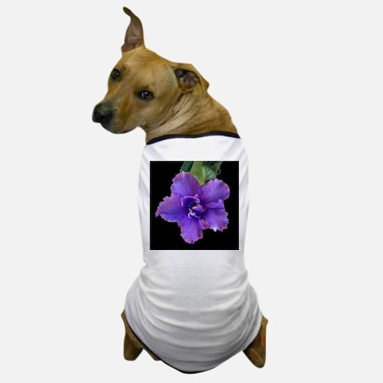 raspberry chiffon black sq.jpg Dog T-Shirt