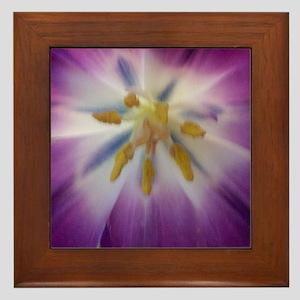 tulip 4a square Framed Tile
