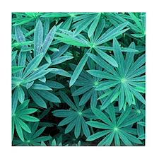 Green Leaves Pattern Tile Coaster
